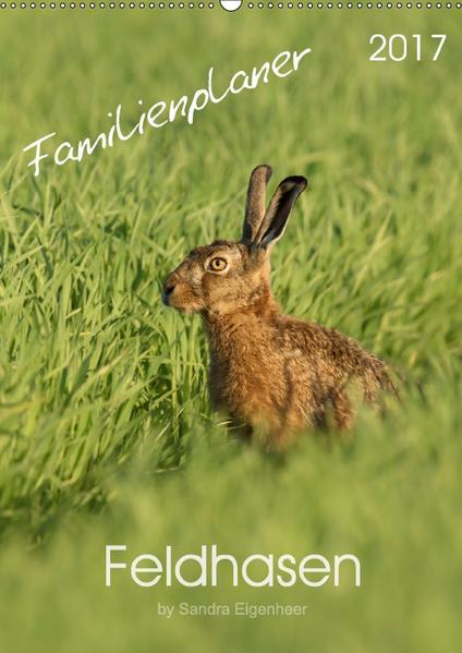 Feldhasen - Familienplaner (Wandkalender 2017 DIN A2 hoch) - Coverbild