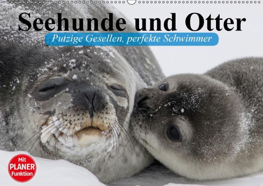 Seehunde und Otter. Putzige Gesellen, perfekte Schwimmer (Wandkalender 2017 DIN A2 quer) - Coverbild