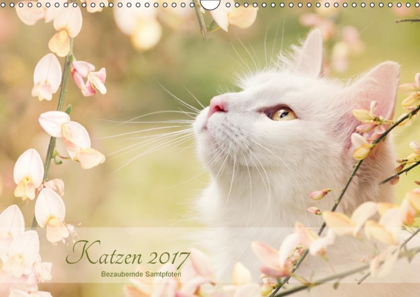 Katzen 2017  Bezaubernde Samtpfoten (Wandkalender 2017 DIN A3 quer) - Coverbild