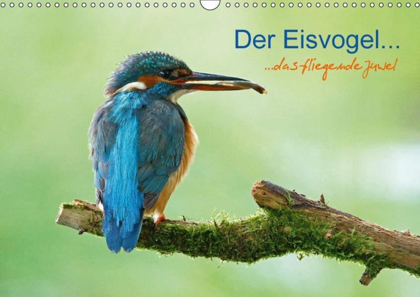 Der Eisvogel...fliegendes Juwel (Wandkalender 2017 DIN A3 quer) - Coverbild