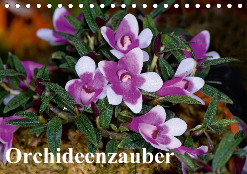 Orchideenzauber (Tischkalender 2017 DIN A5 quer) - Coverbild