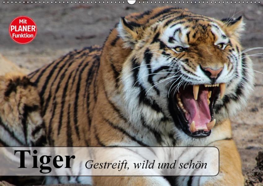 Tiger. Gestreift, wild und schön (Wandkalender 2017 DIN A2 quer) - Coverbild