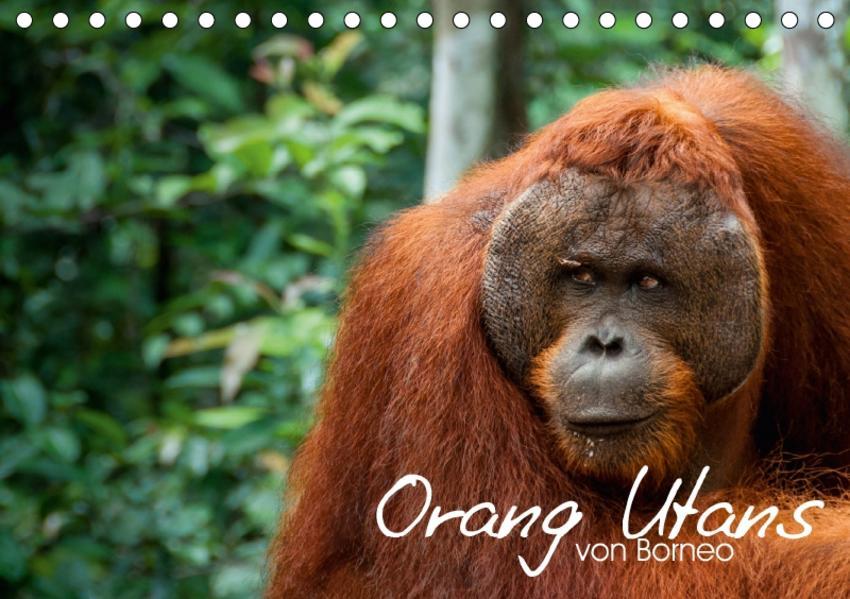 Orang Utans von Borneo Tierkalender 2017 (Tischkalender 2017 DIN A5 quer) - Coverbild
