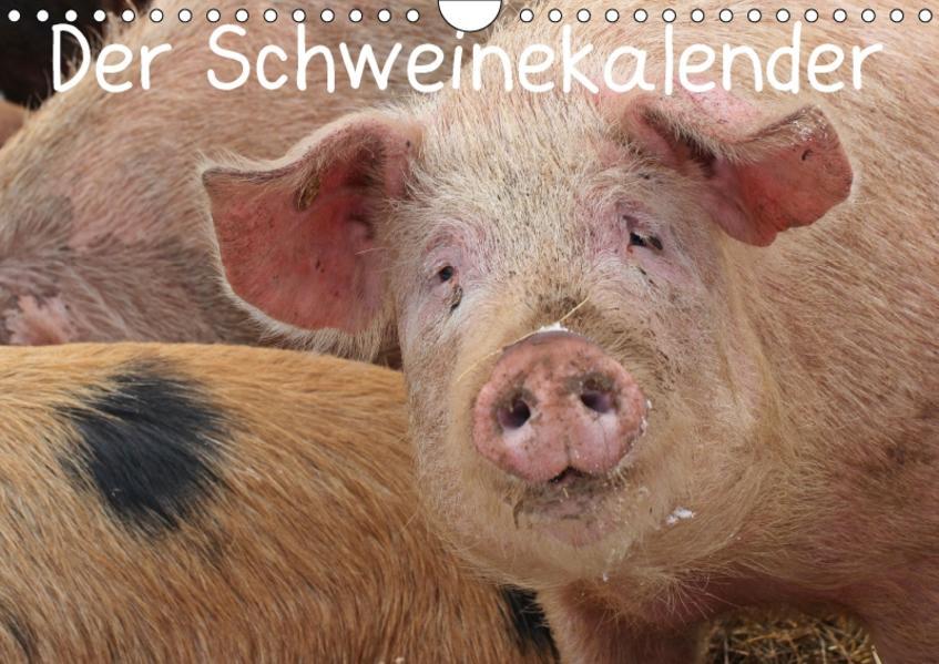 Der Schweinekalender (Wandkalender 2017 DIN A4 quer) - Coverbild