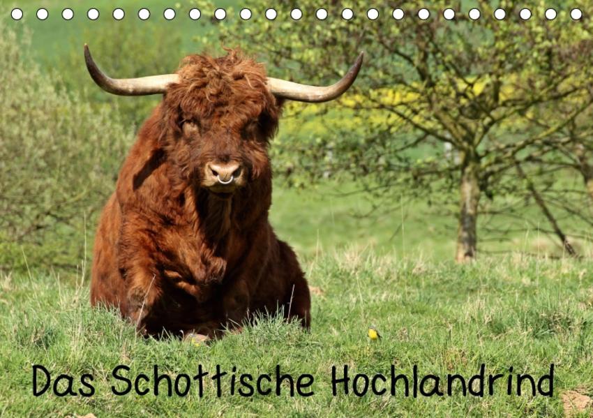 Das Schottische Hochlandrind (Tischkalender 2017 DIN A5 quer) - Coverbild