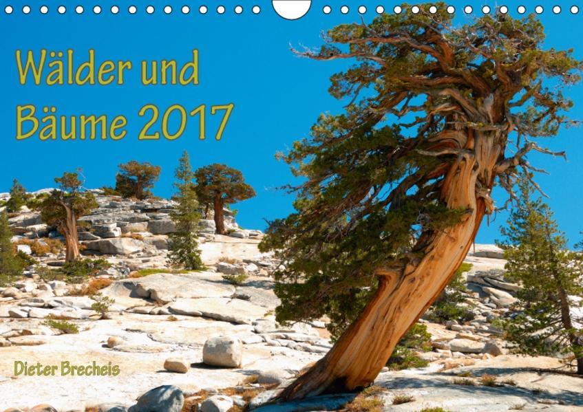 Wälder und Bäume 2017 (Wandkalender 2017 DIN A4 quer) - Coverbild