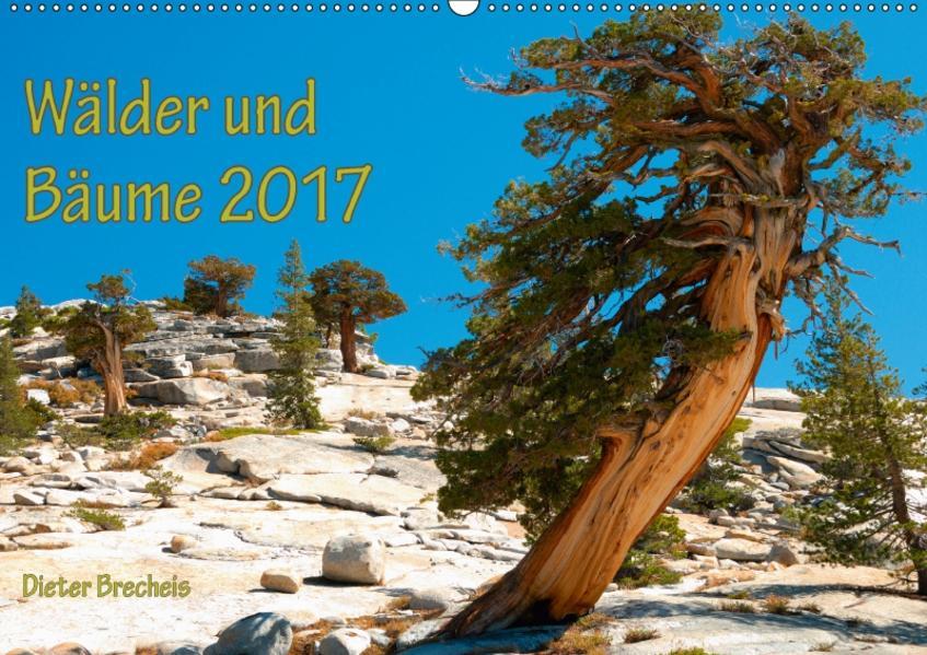 Wälder und Bäume 2017 (Wandkalender 2017 DIN A2 quer) - Coverbild