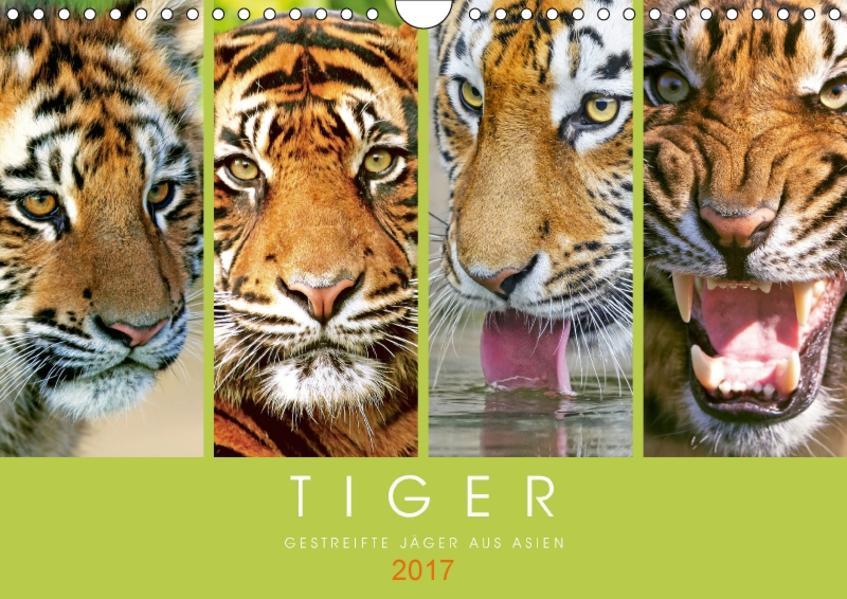 Tiger: Gestreifte Jäger aus Asien (Wandkalender 2017 DIN A4 quer) - Coverbild