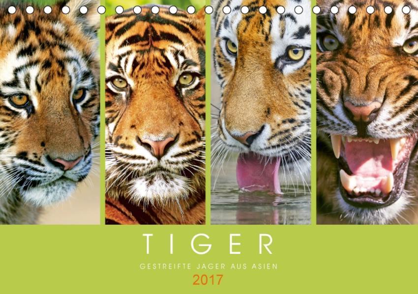 Tiger: Gestreifte Jäger aus Asien (Tischkalender 2017 DIN A5 quer) - Coverbild