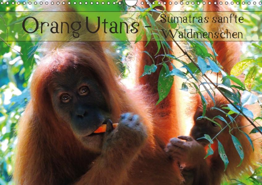 Orang Utans - Sumatras sanfte Waldmenschen (Wandkalender 2017 DIN A3 quer) - Coverbild