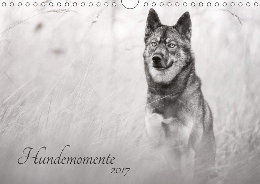 Hundemomente 2017 (Wandkalender 2017 DIN A4 quer) - Coverbild