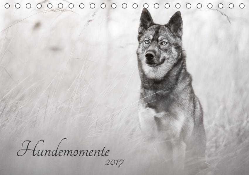 Hundemomente 2017 (Tischkalender 2017 DIN A5 quer) - Coverbild