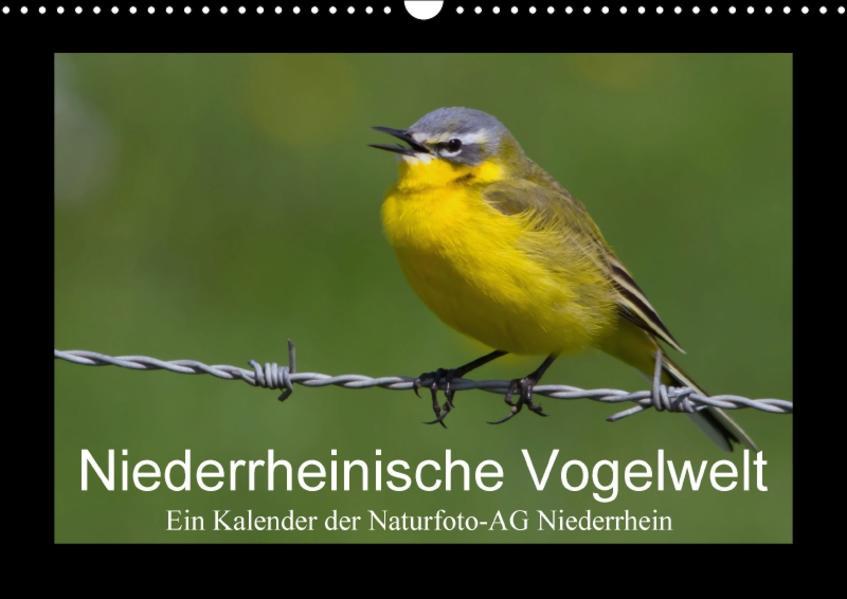 Niederrheinische Vogelwelt (Wandkalender 2017 DIN A3 quer) - Coverbild