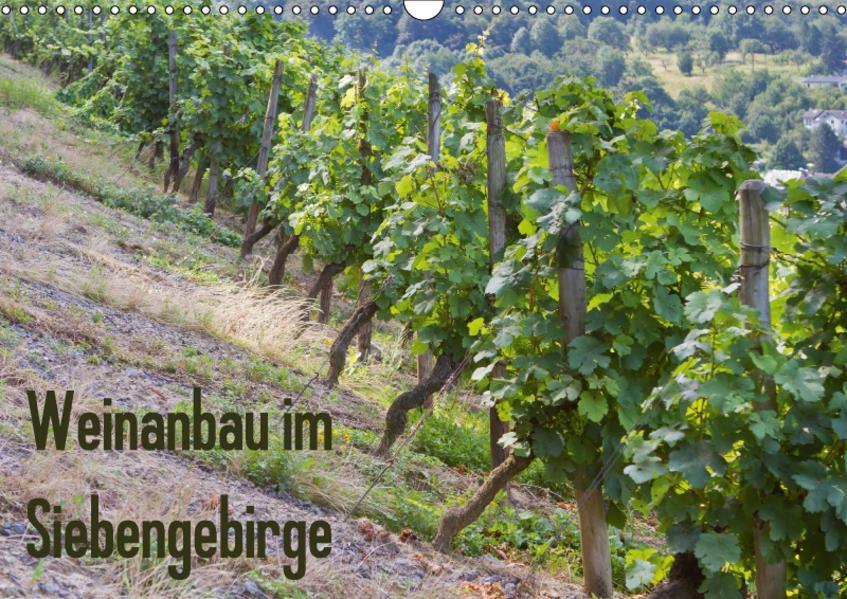 Weinanbau im Siebengebirge (Wandkalender 2017 DIN A3 quer) - Coverbild