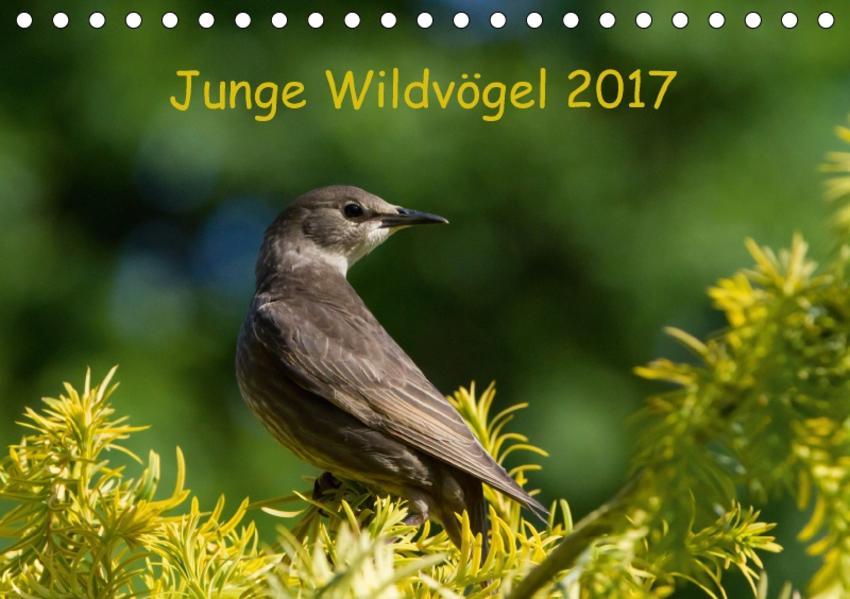 Junge Wildvögel (Tischkalender 2017 DIN A5 quer) - Coverbild
