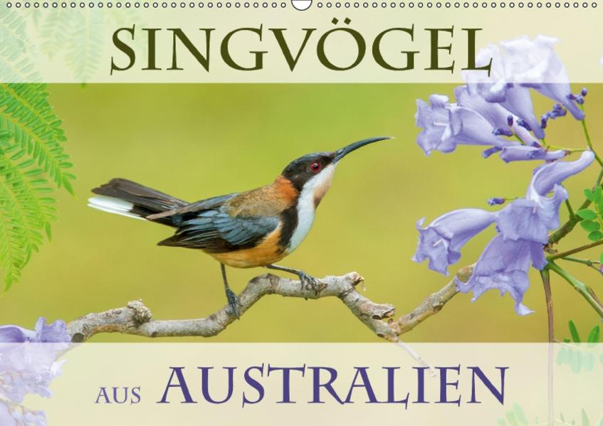 Singvögel aus Australien (Wandkalender 2017 DIN A2 quer) - Coverbild