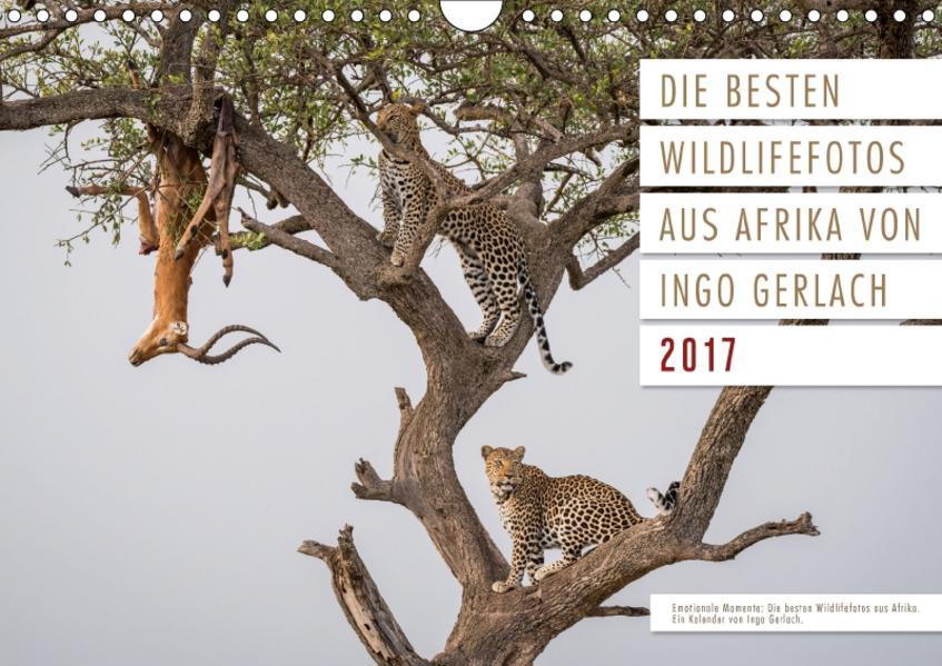 Emotionale Momente: Die besten  Wildlifefotos aus Afrika. (Wandkalender 2017 DIN A4 quer) - Coverbild