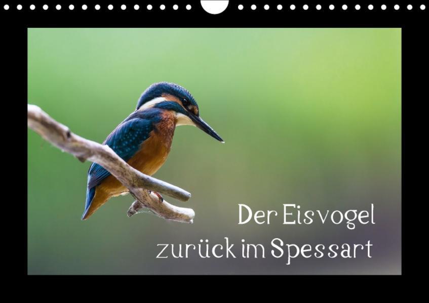 Der Eisvogel zurück im Spessart (Wandkalender 2017 DIN A4 quer) - Coverbild