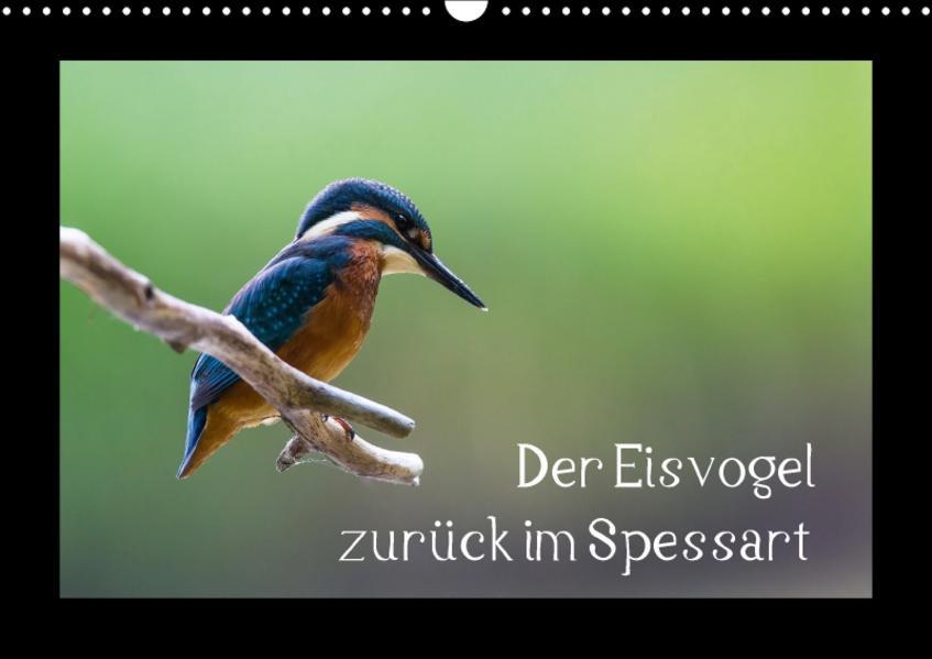 Der Eisvogel zurück im Spessart (Wandkalender 2017 DIN A3 quer) - Coverbild