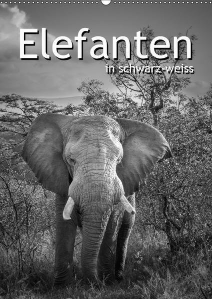 Elefanten in schwarz-weiss (Wandkalender 2017 DIN A2 hoch) - Coverbild