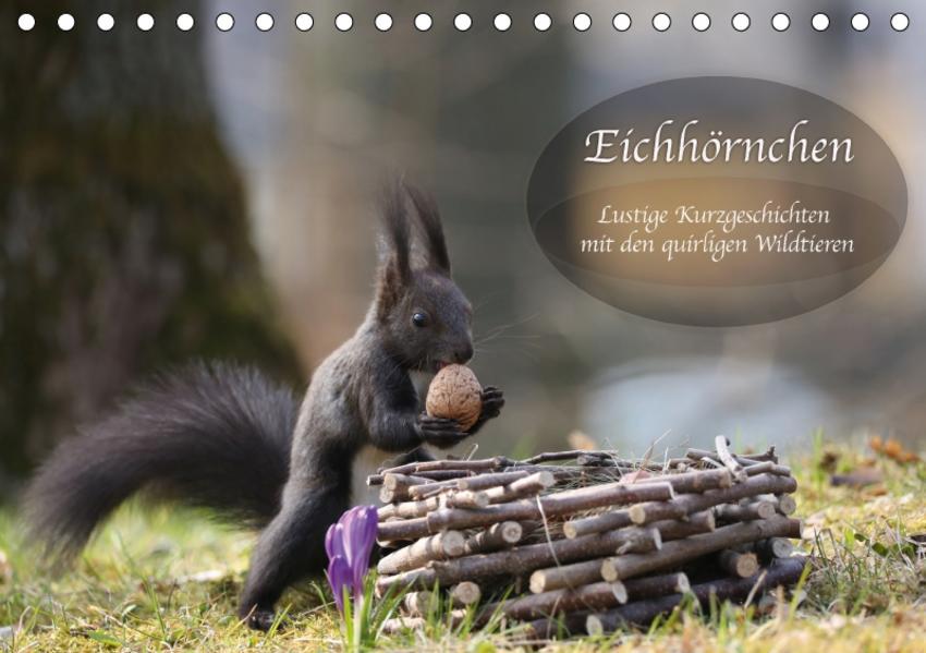 Eichhörnchen - Lustige Kurzgeschichten mit den quirligen Wildtieren (Tischkalender 2017 DIN A5 quer) - Coverbild