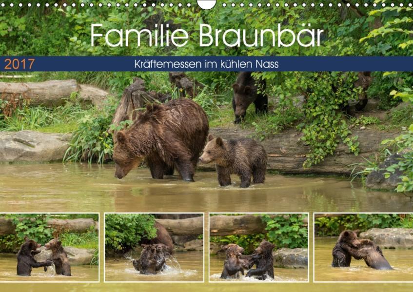 Familie Braunbär - Kräftemessen im kühlen Nass (Wandkalender 2017 DIN A3 quer) - Coverbild