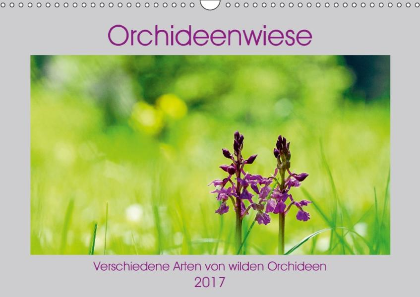 Orchideenwiese  2017 (Wandkalender 2017 DIN A3 quer) - Coverbild
