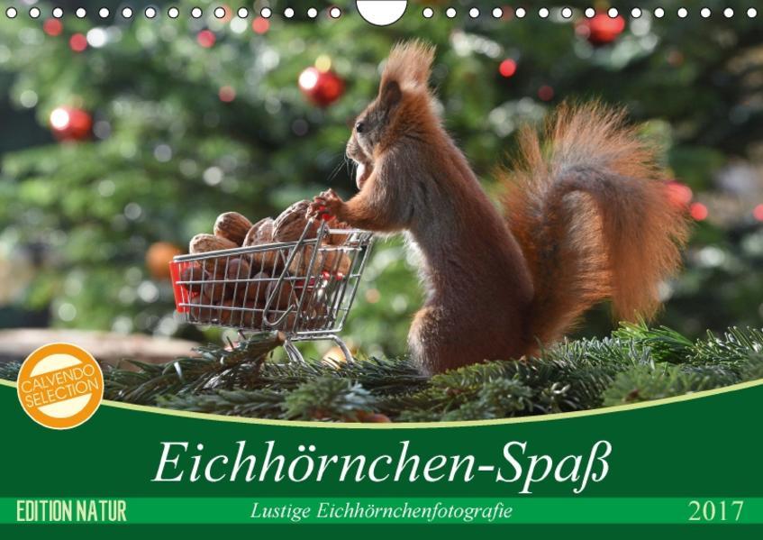 Eichhörnchen-Spaß (Wandkalender 2017 DIN A4 quer) - Coverbild