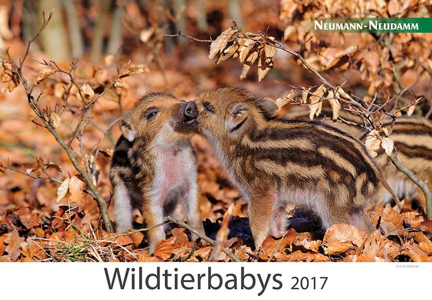 Wildtierbabys 2017 - Coverbild