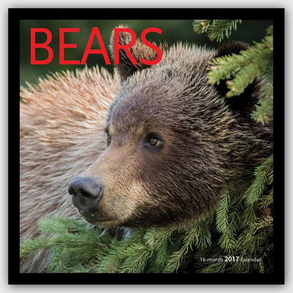 Bears - Bären 2017 - Coverbild