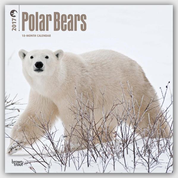 Polar Bears - Eisbären 2017 - Coverbild