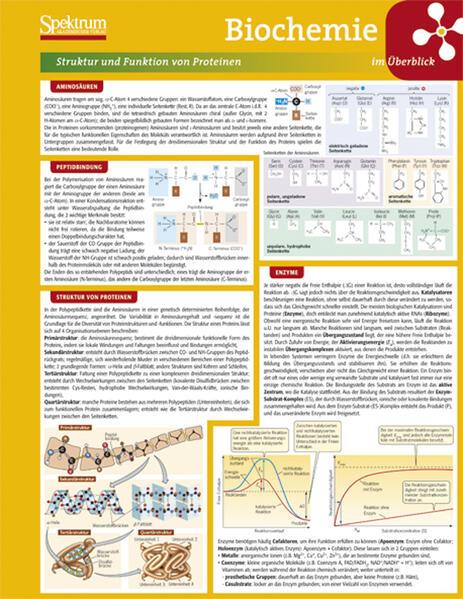 Lerntafel: Biochemie im Überblick - Coverbild