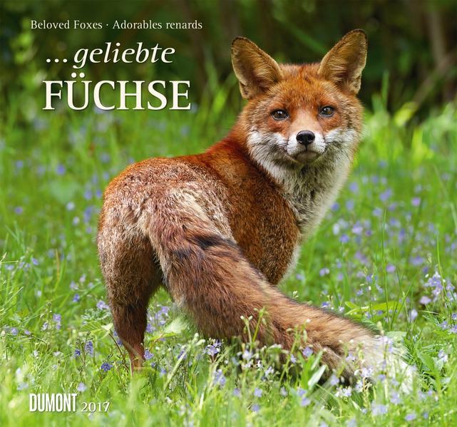 ... geliebte Füchse 2017 - Coverbild