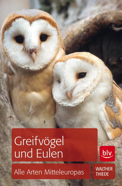 Greifvögel und Eulen   - Coverbild