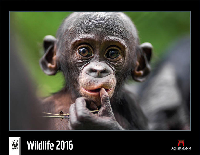 WWF Wildlife 2016 - Coverbild