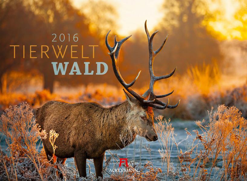 Tierwelt Wald 2016 - Coverbild