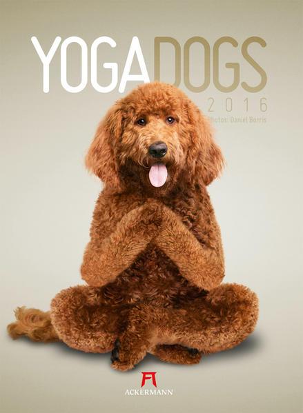Yoga Dogs 2016 - Coverbild