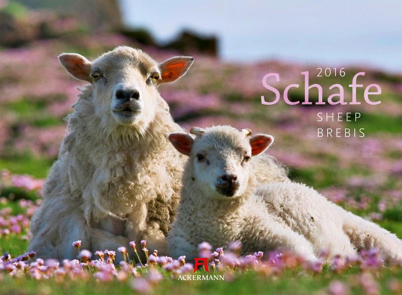 Schafe 2016 - Coverbild
