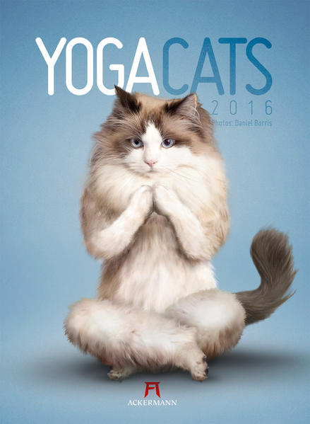 Yoga Cats 2016 - Coverbild