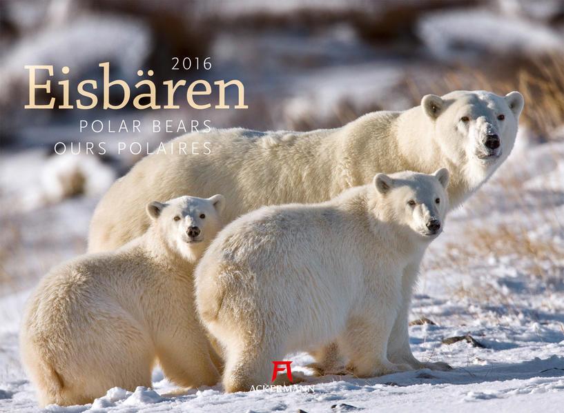 Eisbären 2016 - Coverbild
