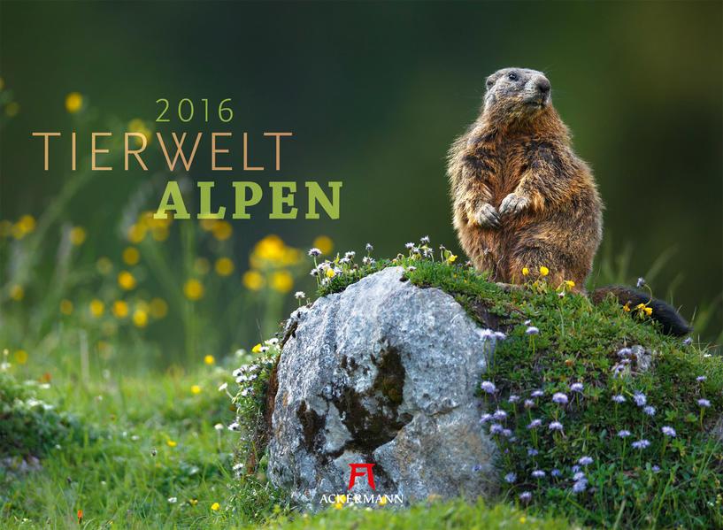 Tierwelt Alpen 2016 - Coverbild