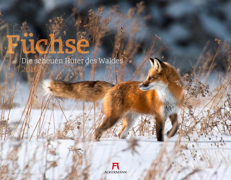 Füchse 2016 - Coverbild
