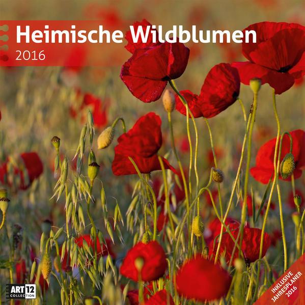 Heimische Wildblumen 30 x 30 cm 2016 - Coverbild