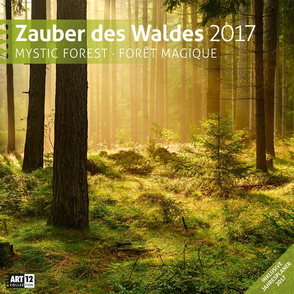 Zauber des Waldes 30 x 30 cm 2017 - Coverbild