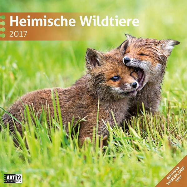 Heimische Wildtiere 30 x 30 cm 2017 - Coverbild