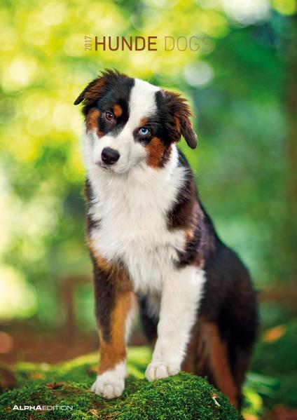 Hunde 2017 - Bildkalender - (30 x 42) - Coverbild