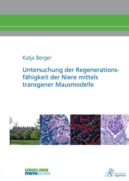Untersuchung der Regenerationsfähigkeit der Niere mittels transgener Mausmodelle - Coverbild