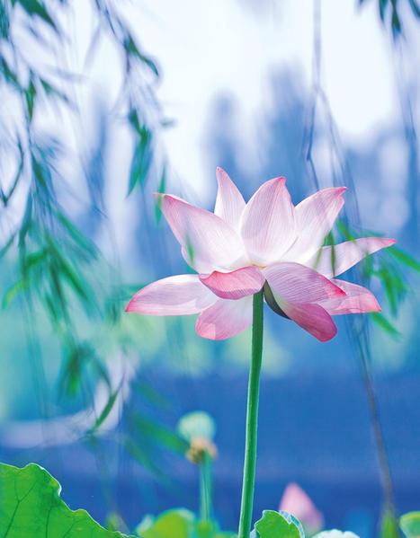 Lotus III - Coverbild