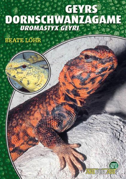 Die Geyrs Dornschwanzagame - Coverbild