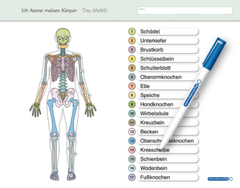 Ich kenne meinen Körper - Das Skelett - Coverbild